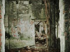 Taiwanese Haunted House VI (weizor) Tags: green abandoned nature wet rain architecture lumix asia taiwan panasonic doorway derelict chiayi vignette jiayi tw hauntedhouse overrun micro43 microfourthirds 20mmf17asph dmcg3