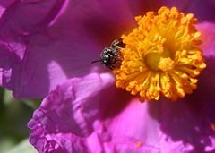 abeils (jean-mie) Tags: thelook colorsofnature flickrbronze blinkagain allnaturesparadise colorsfinal super~six1