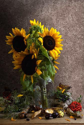 フリー写真素材, 花・植物, 向日葵・ヒマワリ, 黄色の花,