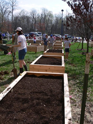 Community members work to build raised beds for the JCC garden in Indianapolis, IN.  This past summer marked the garden's first season