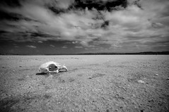 dry (andreas_photography) Tags: bw death skull skies desert dry norain