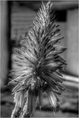 Aloe Red Flower