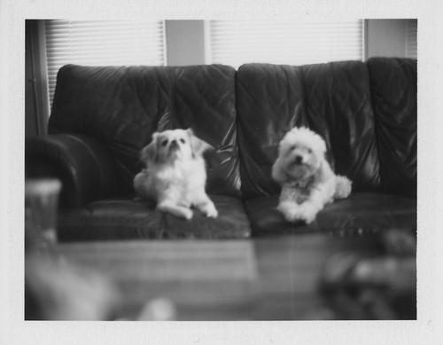 Charlee & Lula