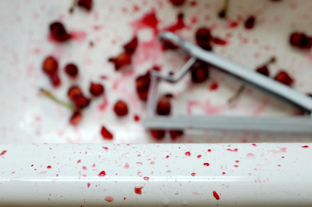 Cherry pitting carnage by Eve Fox, Garden of Eating blog, copyright 2011