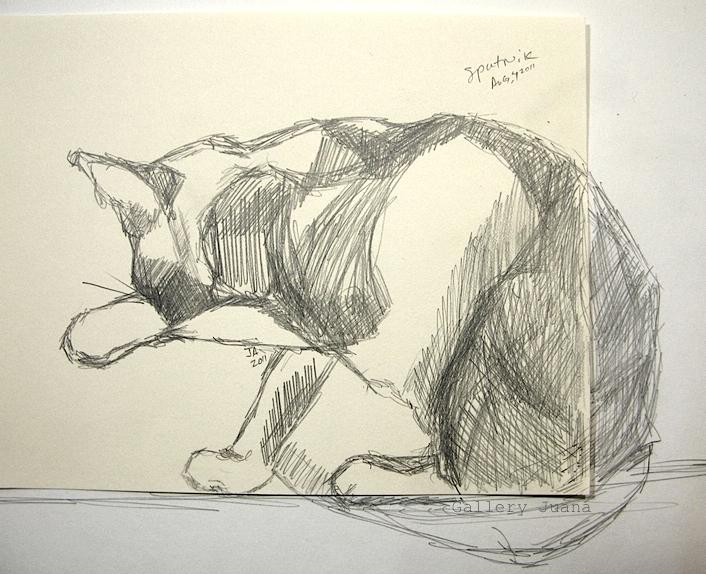 cat, pencil drawing