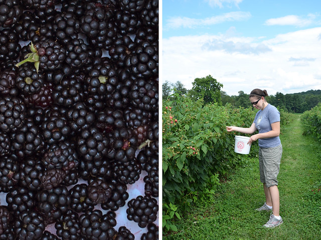 berry picking at butlers orchard
