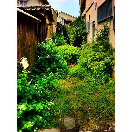 今日の写真 No.345 – 昨日Instagramへ投稿した写真(1枚)/iPhone4+Camera+