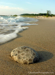 Petoskey Stone   ...  on the Beach (Ken Scott) Tags: summer usa beach michigan wave august lakemichigan greatlakes freshwater leelanau backpage petoskeystone kenscottphotography kenscottphotographycom