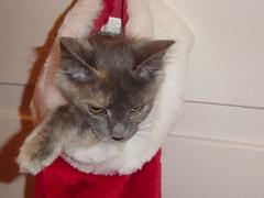 Christmas Cymbeline
