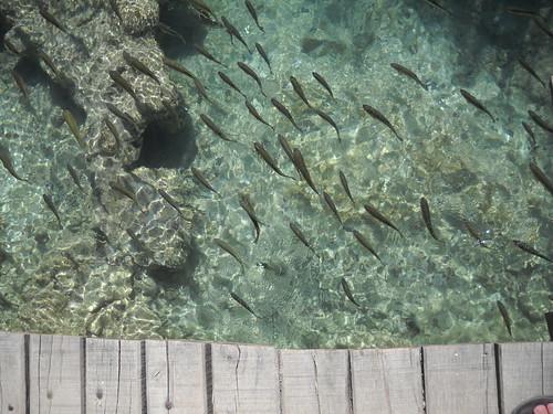 Fish Heaven, Plitvice National Park, Croatia