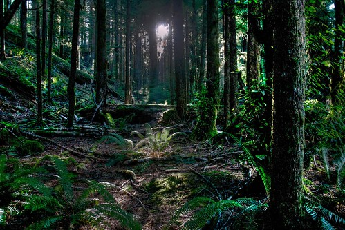 Forest, Olympic National Park