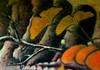 15 (marosmarcell) Tags: sea detail leave water yellow tattoo ink japanese gold ginkgo swan branch lotus shore yakuza tinta hattyú irezumi istván fekete sárga levél arany hikae tüskevár tetoválás festék gobu téglás tüskevártattoo