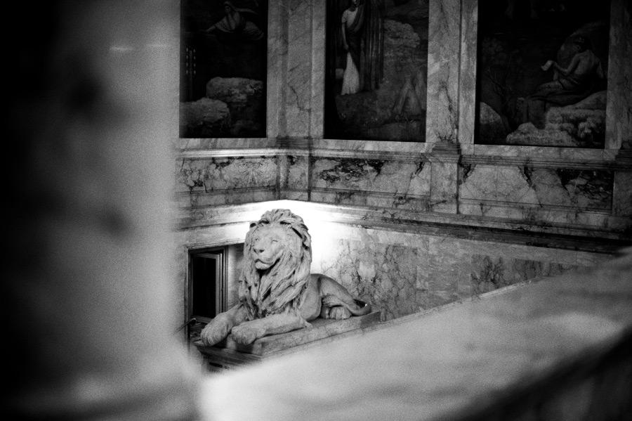 hn_lion