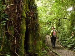 P1180486 (ErikVos) Tags: costarica corcovado jungle monteverde baobab oerwoud totuguero familievos