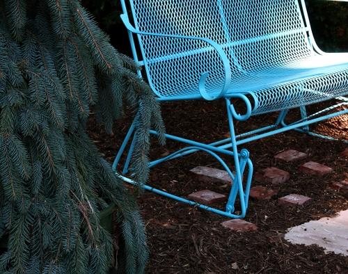 blue.spruce