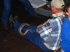 Anacondas 2004 (rollingroadshow) Tags: austintexas alamodrafthouse lakecreek openingweekend alamodrafthousecinema snakewrangler august272004 anacondashuntforthebloodorchid