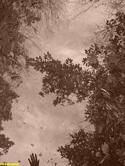 selfportrait, the bravery of being invisible - autorretrato, la valentía de ser invisible (minidreamer ♫) Tags: trees naturaleza selfportrait me nature water beauty leaves sepia forest hojas reflex pond woods agua poetry poem loneliness arboles hand autoportrait invisible yo eu tranquility natura moi reflected bosque silence reflejo mysterious mano poesia soledad autorretrato stillness myhand silencio belleza bravery misterioso tranquilidad poema charca quietud valentia intothewild coraje mypoetry mimano reflejado mispoemas mypoems mypoesia hacialoslvaje