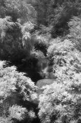 Dow Gardens IR (scott_z28) Tags: trees blackandwhite bw film nature water monochrome gardens mi contrast forest ir diy waterfall md stream minolta michigan 28mm stock d76 infrared epson f28 midland v300 srt101 dow tricities efke homedeveloped rokkor sunny16 ir820