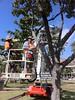"Margot Douglas installing her ""Solar Chandeliers"" PTRG_SE (Perc Tucker Regional Gallery) Tags: strandephemera perctuckerregionalgallery"