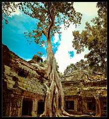 divine growth.. (PNike (Prashanth Naik)) Tags: blue sky building tree green architecture temple nikon cambodia rustic roots structure growth siem reap damaged angkor wat taphrom angkorthom vertorama d7000 pnike