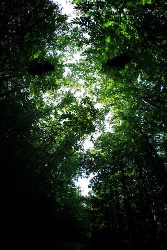 [フリー画像] 自然・風景, 森林, 樹木, グリーン, 201109021300