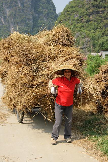 Gigantic Rice Bundle on a Cart