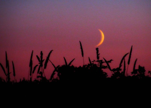 08/31/11 Moon Rise by roswellsgirl