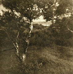 Borgarnes / Pictorialistic Assault (Spitting Doc) Tags: tree island iceland holga lith rapid lithprint se5 borgarnes autaut portriga pictorialistic prk118 3040100005refreshed