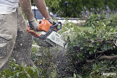 In Action 2 (Dharielt) Tags: house tree ray helmet chainsaw ax removal ban stihl