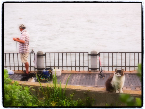 angler and cats