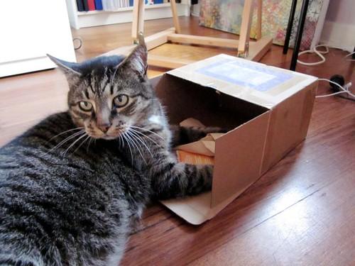 BigCat & Box