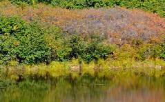 Autumn in Denali - Alaska reflections (blmiers2) Tags: travel autumn fall nature water alaska reflections landscape landscapes nikon denali d3100 blm18 blmiers2
