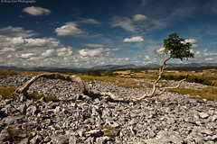 Gnarly Old Tree (.Brian Kerr Photography.) Tags: light shadow sky tree clouds canon landscape rocks pavement lakedistrict cumbria limestone cumbrian whitbarrowscar eos5dmkii briankerrphotography