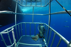 DSC_0323 (DiLyBe) Tags: white mexico island shark explorer great scuba diving cage guadalupe isla nautilus