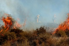 LAFD and Allied Agencies Hold Sun Valley Wildfire to Ten Acres. © Photo by Rick McClure