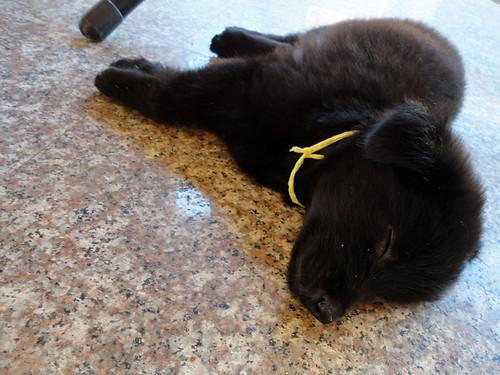 Thailand 6 fluffy puppy