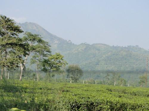 Outskirt of Shiliguri