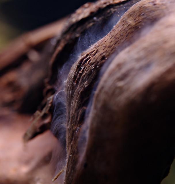Wood fluff
