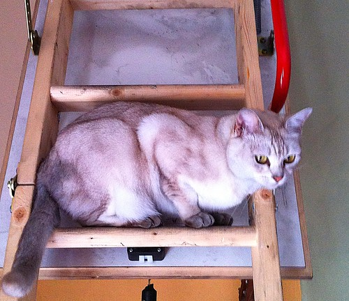 Lilith on the loft ladder