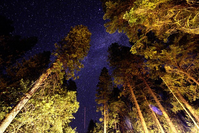 stars through the trees