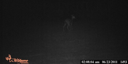 Buck?June2011GameCam