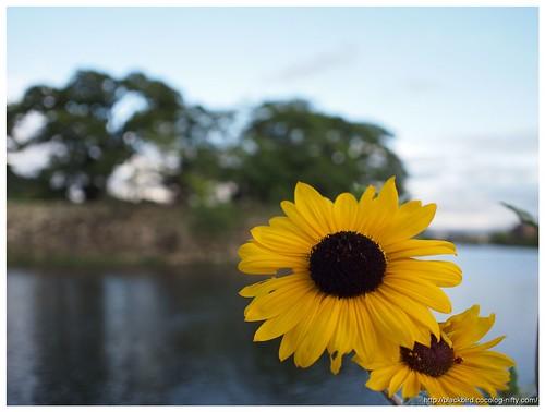Flowers 110916 #02