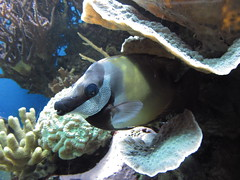 Blue Reef Aquarium , Cornwall