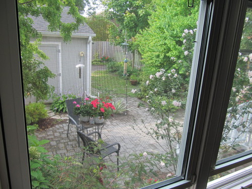 The view out the back door