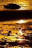 #850C0260 (Zoemies...) Tags: sunset beach boat balikpapan melawai zoemies