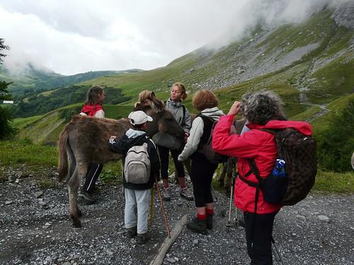 Rencontre avec les ânes, saveurs 016