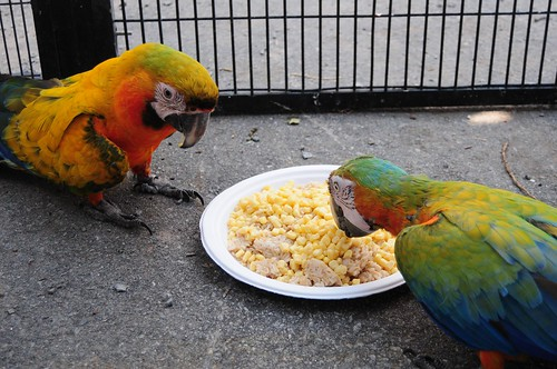 Malnutrition in Parrots and What to Do About it