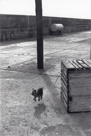 Elliott Erwitt, Ballycotton, Eire, Ireland, (Levitating Dog), 1968