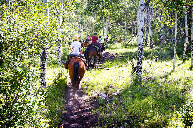 Black Mountain Colorado Dude Ranch woods horse ride