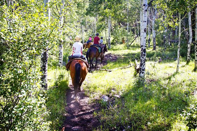 Black Mountain Colorado Dude Ranch woods horse ride